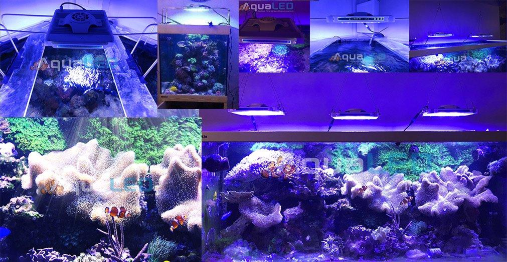Module z150 eclairage led pour aquariums r cifaux - Eclairage led aquarium ...