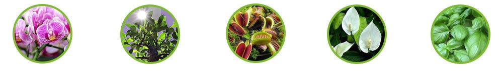 Eclairage led plantes vertes orchidees carnivores basilic